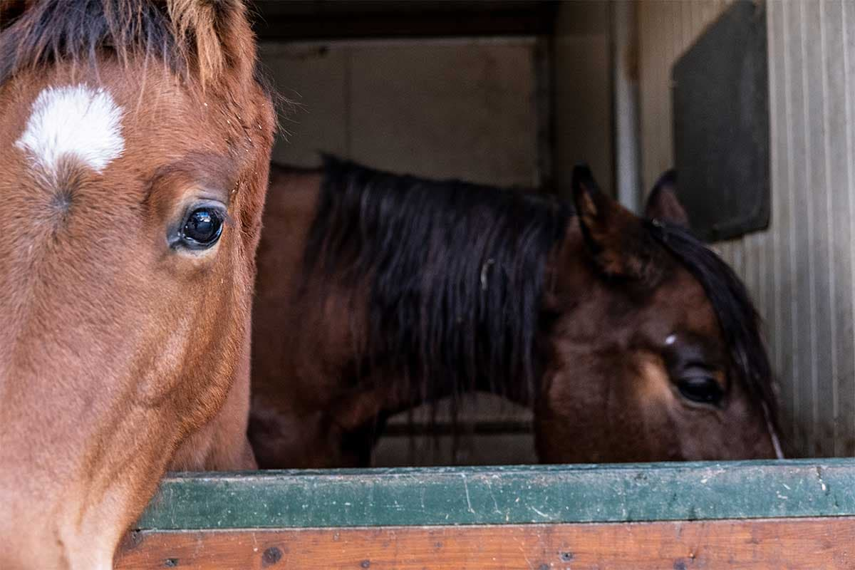 agriturismo allevamento cavalli toscana
