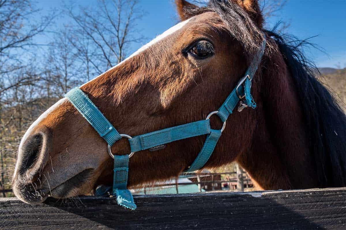 addestramento cavalli lunigiana