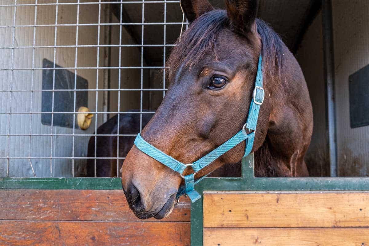 agriturismo lusso toscana cavalli