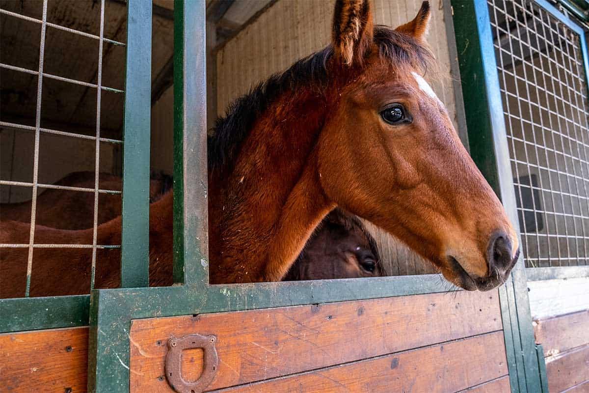 agriturismo toscana lusso cavallo